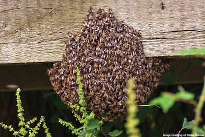 Does Your Swarm Look Like This?